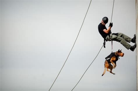officers participate  swat dog school local news