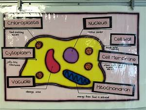 Fifth Grade Cell Models