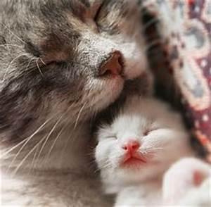 Cosa succede e come comportarsi quando mamma gatta resta incinta