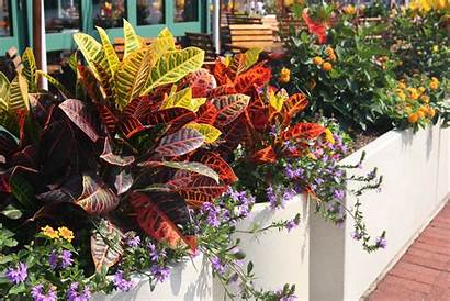 Plants Tropical Foliage Garden Colorful Cascading Container