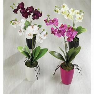 Pot Fleur Interieur : plante a fleur interieur l 39 atelier des fleurs ~ Teatrodelosmanantiales.com Idées de Décoration