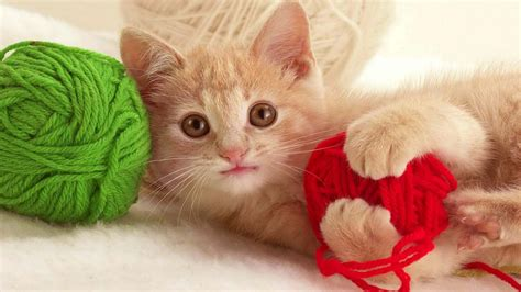 15 Crazy Naughty Cats Playing Peacefully Images