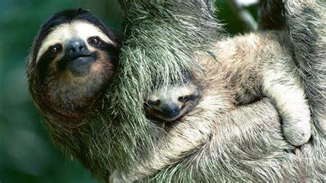 ternura animal las  fotos mas lindas de los animales