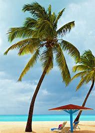 Caribbean Beach Palm Trees