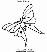 Moth Luna Coloring Pages 78kb 550px Dnr sketch template