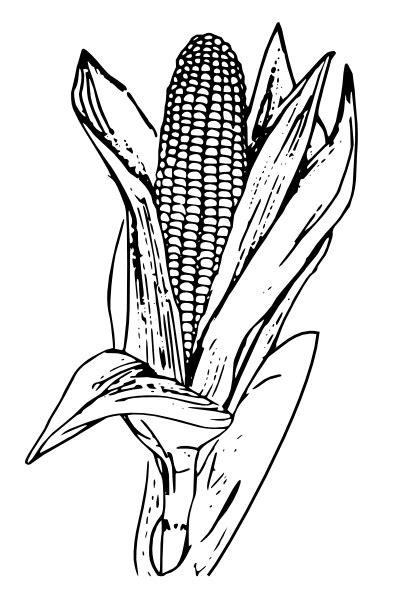 library  ear  corn clip art freeuse black  white