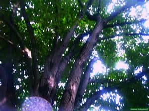 Was Im Herbst Im Garten Machen by Es Gibt Viel Zu Tun Im Garten Im Herbst