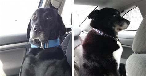 times dogs realized      vet