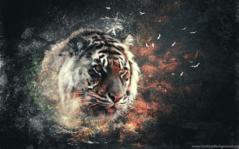 3d Wallpaper Hd Tiger by 3d Tiger Wallpapers Wallpapers Hd Wide Desktop Background