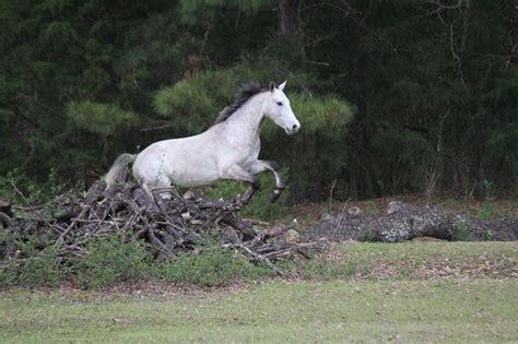 connemara horse dark