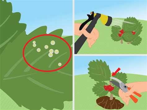 Treating Powdery Mildew On Plants How To Get Rid Of Red Spider Mites Organically 14 Steps