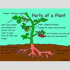 Parts Of The Plants ⌘⌘ A Diagram Of Plant Parts And Their Functions