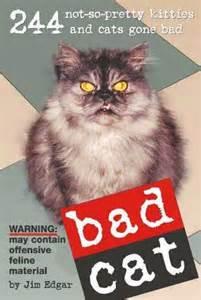 bad cat bad cat