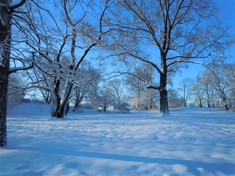 A Snowy Tundra In Central Park By Brooklyn47 On Deviantart