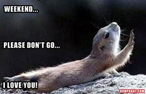 weekend, please don't go, i love you, funny animals ...