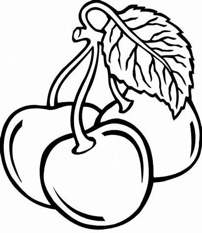 Cherry Coloring Pages Fruits Drawing Three Cherries
