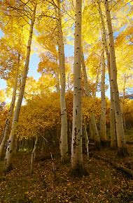 Fall Color Photography Tips