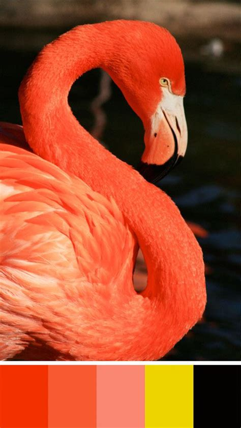 what color is a flamingo colors of flamingos