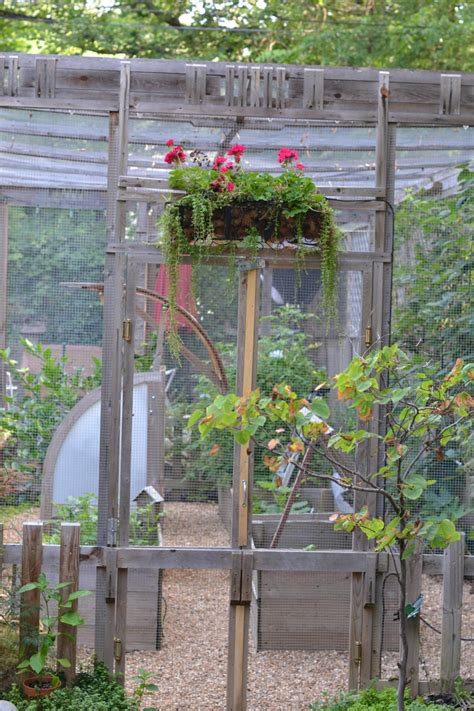 how to keep chipmunks out of your garden 12 ways to critter proof your garden yourgardeningfriendcom how to get rid of chipmunks 17 best