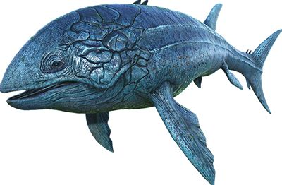 Leedsichthys was an ancient fish that lived during the middle jurassic period or about 189 to 144 million years ago. Build a raft with a trap on it and kite over to trap so ...