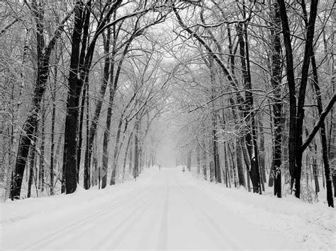 Black And White Forest Background For Desktop Pixelstalknet