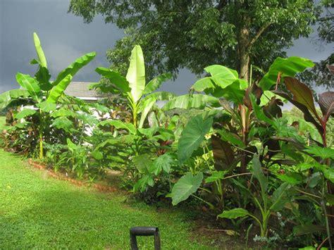 tropical plants zone 7 garden photos forum chance s hardy tropical garden zone 7a western north carolina garden org