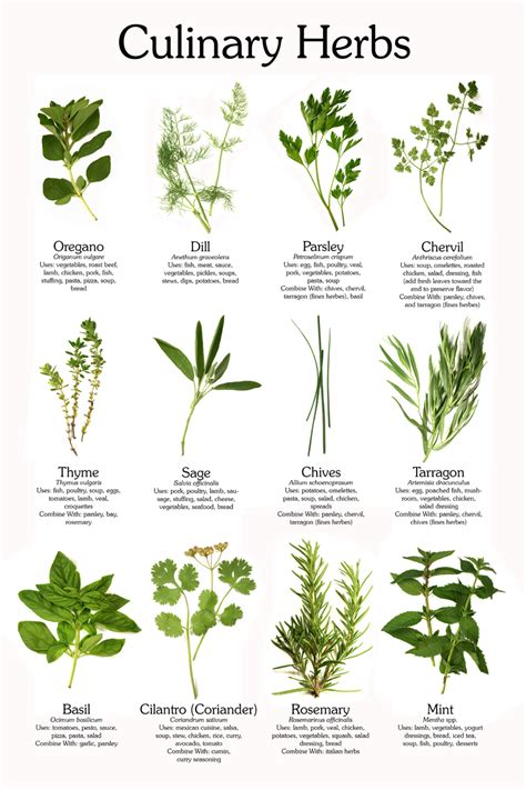 herbs plants pictures herb