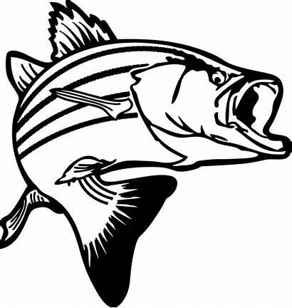 Outline Fish Bass Clip Clipart Clipartion
