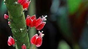 Pflanze Mit Roten Blüten : deutschland k ln blumen und bl ten malvengew chs mit ~ Eleganceandgraceweddings.com Haus und Dekorationen