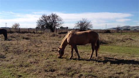 horse normal behavior gore horsemanship rick owner started why bite