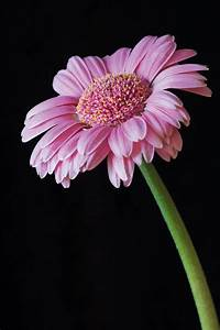 25 Flower Photography Tips For Beginners