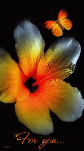 225 best flower gifs only images on beautiful