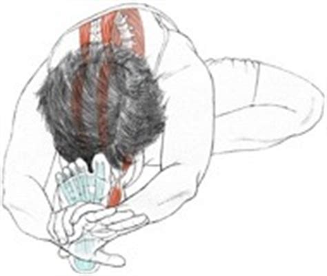 Sirsasana is often referred to as the king of all yoga poses and rightly so, since it is one of the practice's most difficult to master. Janu Sirsasana — YogaAnatomy.net