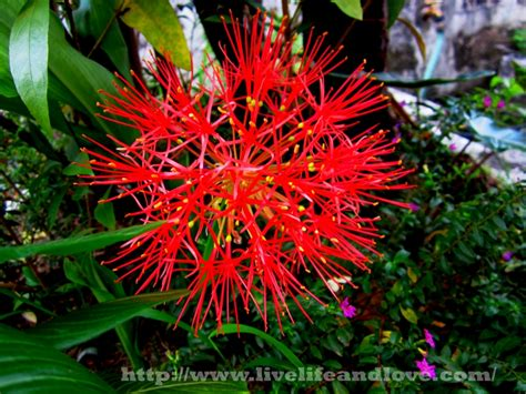 flowering bulbs live and