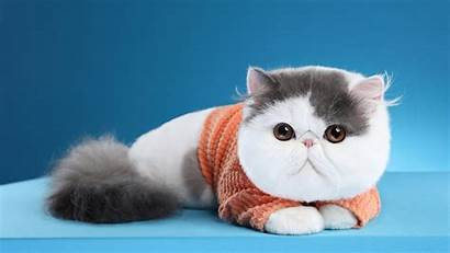 Cat Down Lying Animals Chubby Wallpapers Birds
