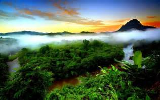 tropical rainforest mist evaporation green forest mountain