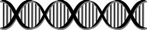 Double Helix Black And White Pictures to Pin on Pinterest ...