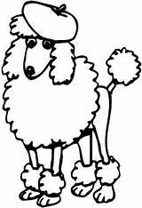 Poodles Standard Coloring Sheets sketch template