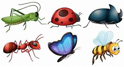 Different Type Insects Vector Illustration Insect Kind