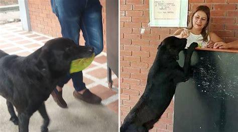 dog brings  leaf   store  day  buy treats