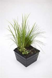 Wasserpflanzen Teich Kaufen : teichpflanzen unverzichtbar f r einen gesunden teich velda ~ Michelbontemps.com Haus und Dekorationen