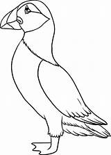 Puffin Coloring Pages Draw Toddlers Colouring Drawing Puffins Bird Drawings Outline Printable Line Easy Template Craft Step Birds Momjunction Getcolorings sketch template