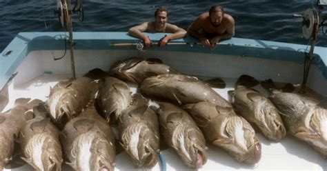 grouper goliath keep strong fishing poll