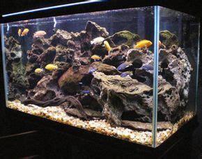 Aquascaping Cichlid Aquarium by How To Set Up And Aquascape A Cichlid Habitat