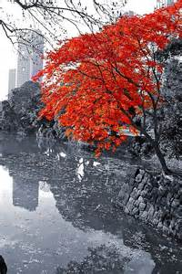 Color Splash Photography Landscapes