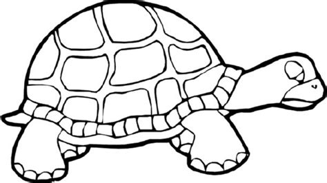 Turtles Coloring Page Coloring Home
