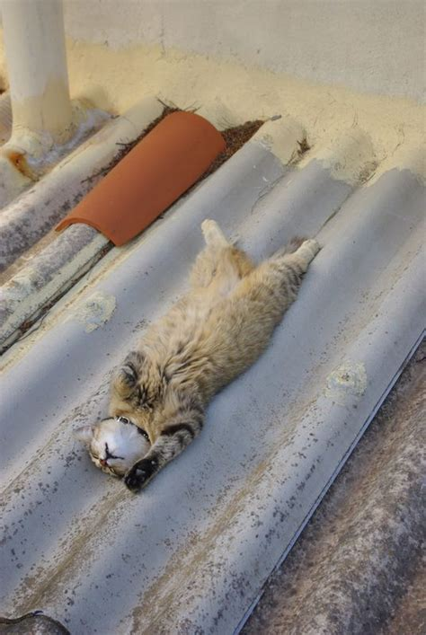 cat on a tin roof cat on a tin roof the starring the late