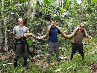 Anaconda Snake Largest Wallpapers Rainforest Tropical Snakes