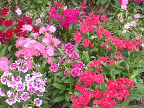 file flower garden unknown plant 2 jpg