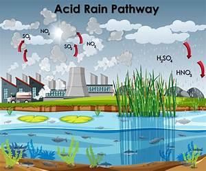 Acid Rain Illustration Stock Illustrations  U2013 242 Acid Rain